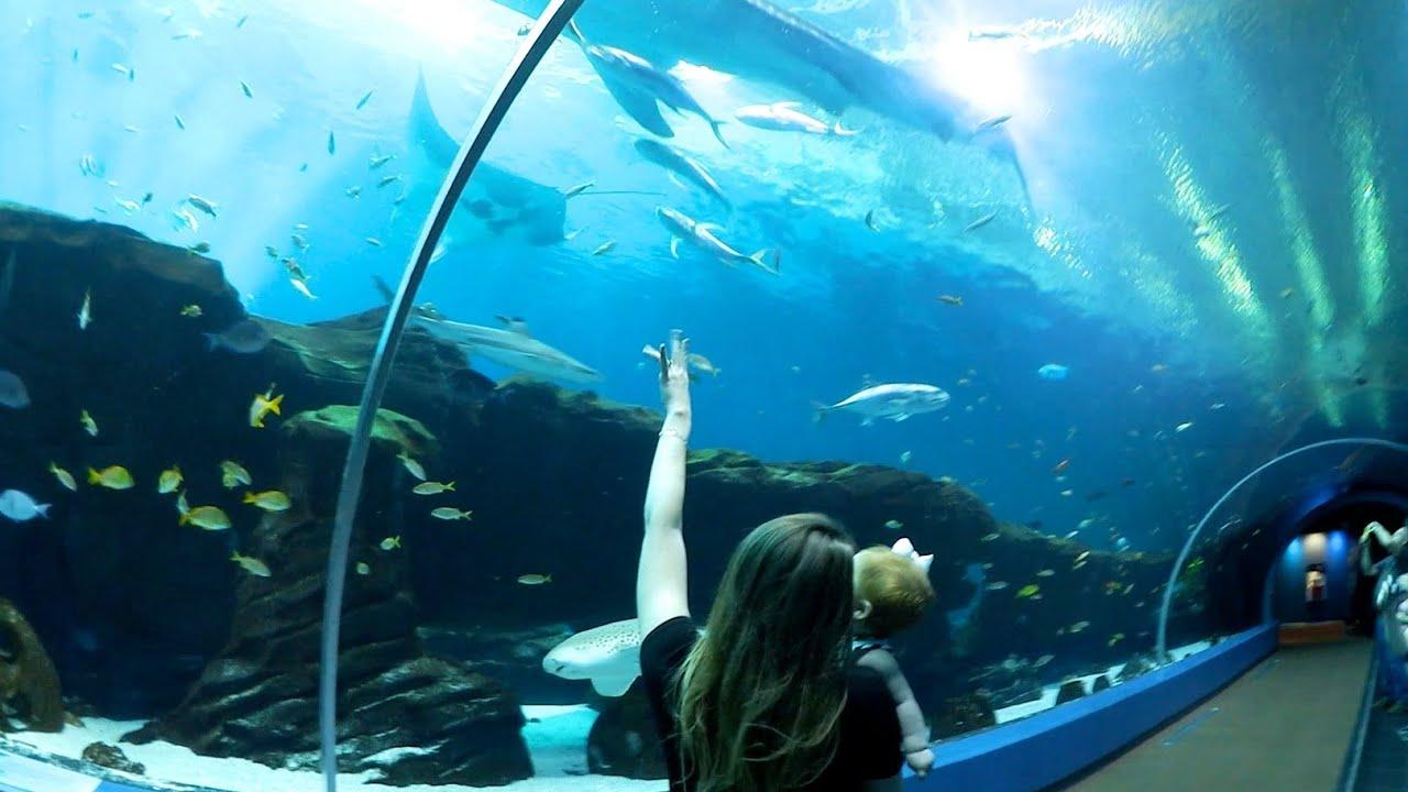 Let 39 S Go To The Aquarium Fav Vlog Ever Youtube