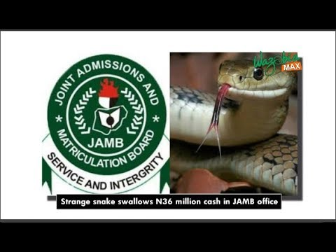 Download STRANGE SNAKE SWALLOWS 36 MILLION NAIRA IN JAMB OFFICE