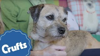 friends-for-life-is-back-nominate-your-unsung-canine-hero-now