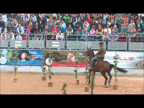 "Working Equitation ""Masters vs. Austria´s Next Generation"""