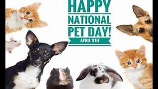 NATIONAL PET DAY: Training Animals By The Spirit (2021)