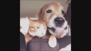 угарное видео про собак и кошек, приколы 2017, полный ржач, угар