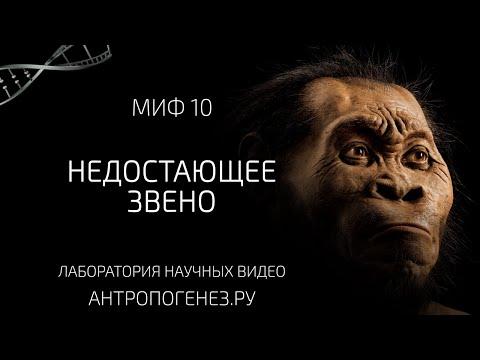 Недостающее Звено. Мифы об эволюции человека.