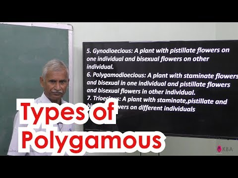 17.Botany | Reproductive Morphology | Types of Polygamous