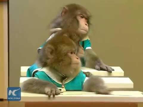 Japanese macaques go to school in E China