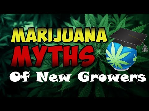 Growing Cannabis Myths - That Newbies Believe