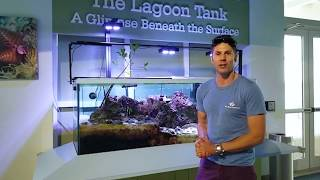 The Lagoon Tank with Dr. Charlie