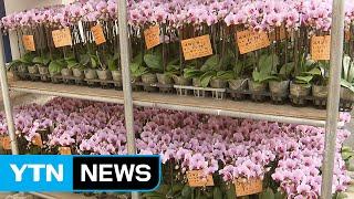 '작은 꽃'으로 소비 늘린다 / YTN (Yes! To…