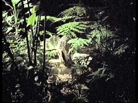 James Le Lacheur (as Matt Berry) on the Belize Rainforest