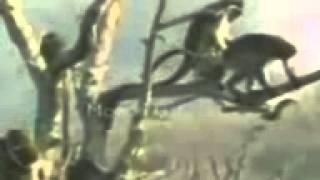 Video el bananero mono download MP3, 3GP, MP4, WEBM, AVI, FLV Oktober 2018