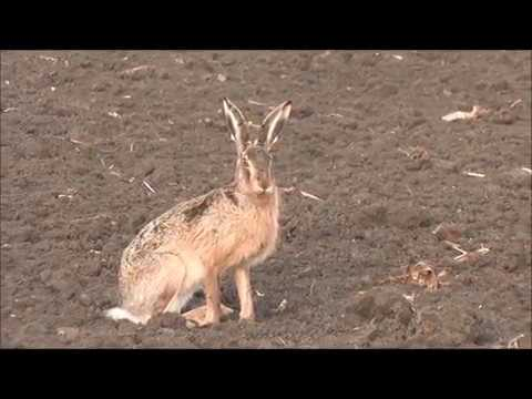 Hare Hunting - Best Of