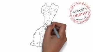 Как нарисовать собаку спаниэля