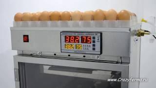 Інкубатор автоматичний АІ-264 від CrazyFerma
