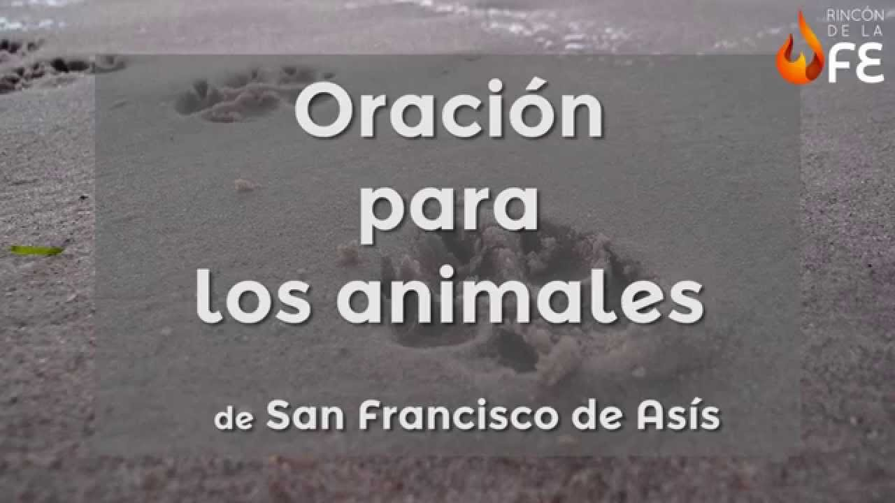 Oracion De San Francisco De Asis Oracion Para Los Animales Youtube
