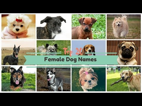 Top 20 Popular Female Dog Names