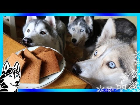 DIY GRAHAM CRACKERS FOR DOGS | DIY Dog Treats | Snow Dogs Snacks 80