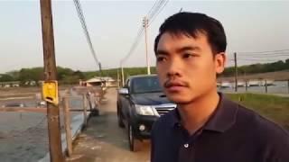 เลี้ยงกุ้งบ่อปูน ราชันย์ฟาร์ม ตราด /น้องกุ้งไทย