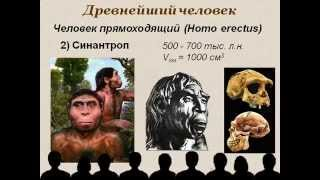 Эволюция человека.AVI