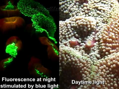 Underwater Fluorescence