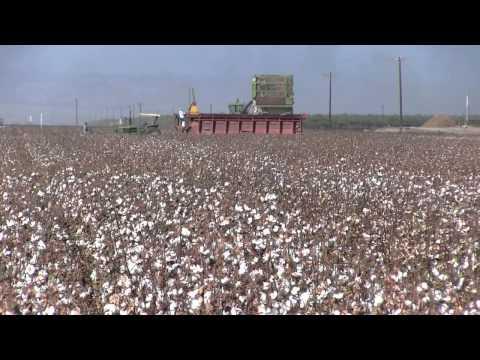 San Joaquin Valley Cotton Crop 2011