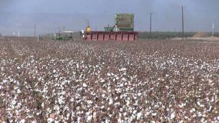 San Joaquin Valley Cotton Crop 2011
