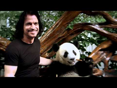 Yanni  World Wildlife Fund & Yanni  Santorini the Panda