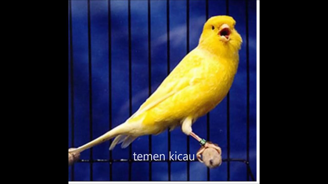 Suara Isian Burung