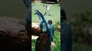 Познавательное видео про попугаев