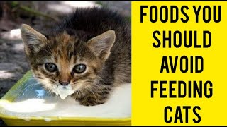 What Foods Cat Can't Eat?