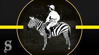 Warum Menschen nicht auf Zebras reiten