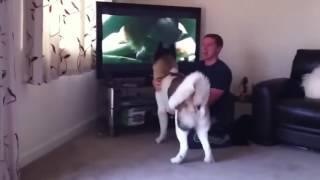 Стоимость усыпления собаки Москва