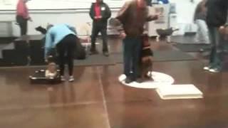 Dog Training - Who Is Alpha?