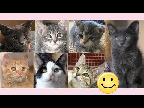 Smile - 21 Cute Kittens Playing