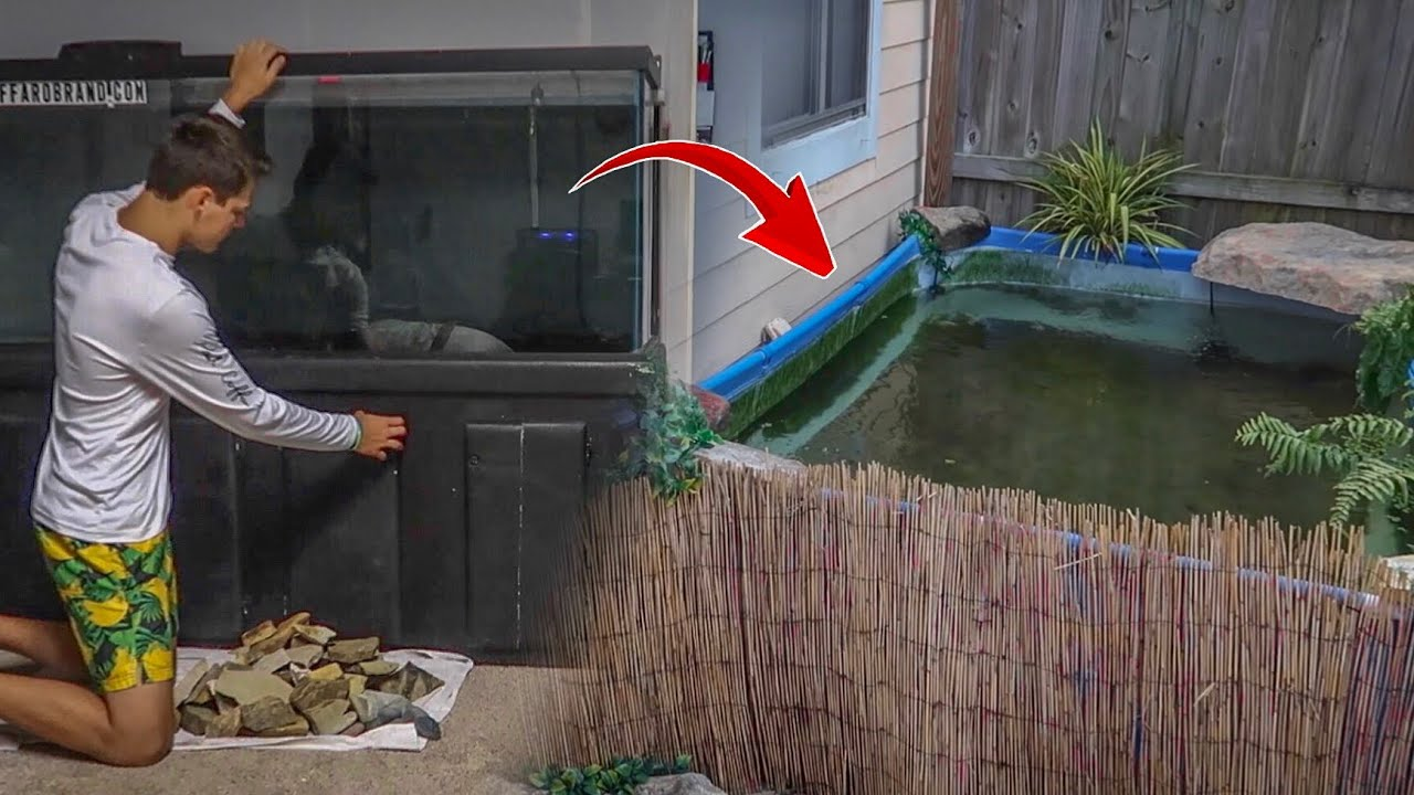 putting-all-my-fish-into-pool-pond