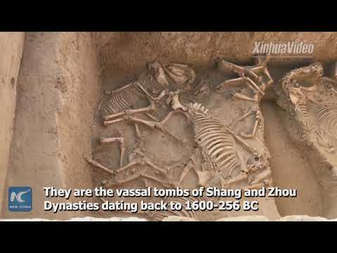 Ancient tombs excavated in NW China belong to Shang and Zhou vassals