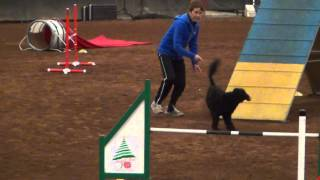 Lone Hickory Arena Dog Agility