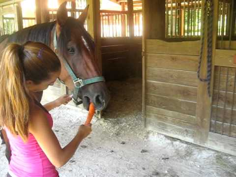 The horse who doesn't know how to eat a carrot...