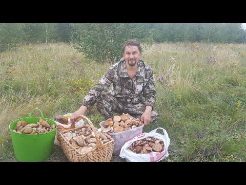 Тихая охота собираем Грибы Подберезовики в лесу Самарская область
