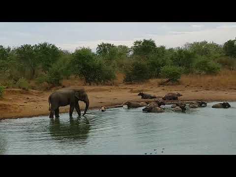Safari tours & other great wildlife experiences - Aya -