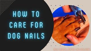 How to Care for Dog Nails Dremeling black dog nails Using dog dremel dog nail grinder