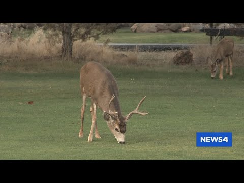 Plan Proposed To Bow Hunt Deer In St. Louis Co. Parks To Control Population