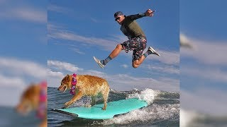 Watch Surfer Teach His Dog How To Ride Wave Like a Pro