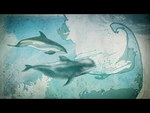 Can Data From Space Save Dolphins?