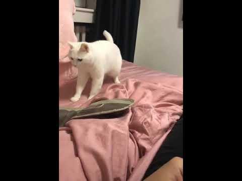 Josh Nagy - Watch: Beatboxing Cat