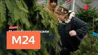 """""""Это наш город"""": в Москве откроются 214 елочных базаров - Москва 24"""