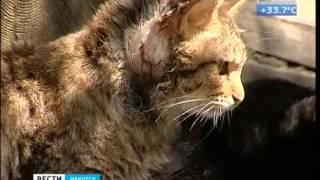 В приют для десятков кошек превратила свою квартиру жительница Иркутска