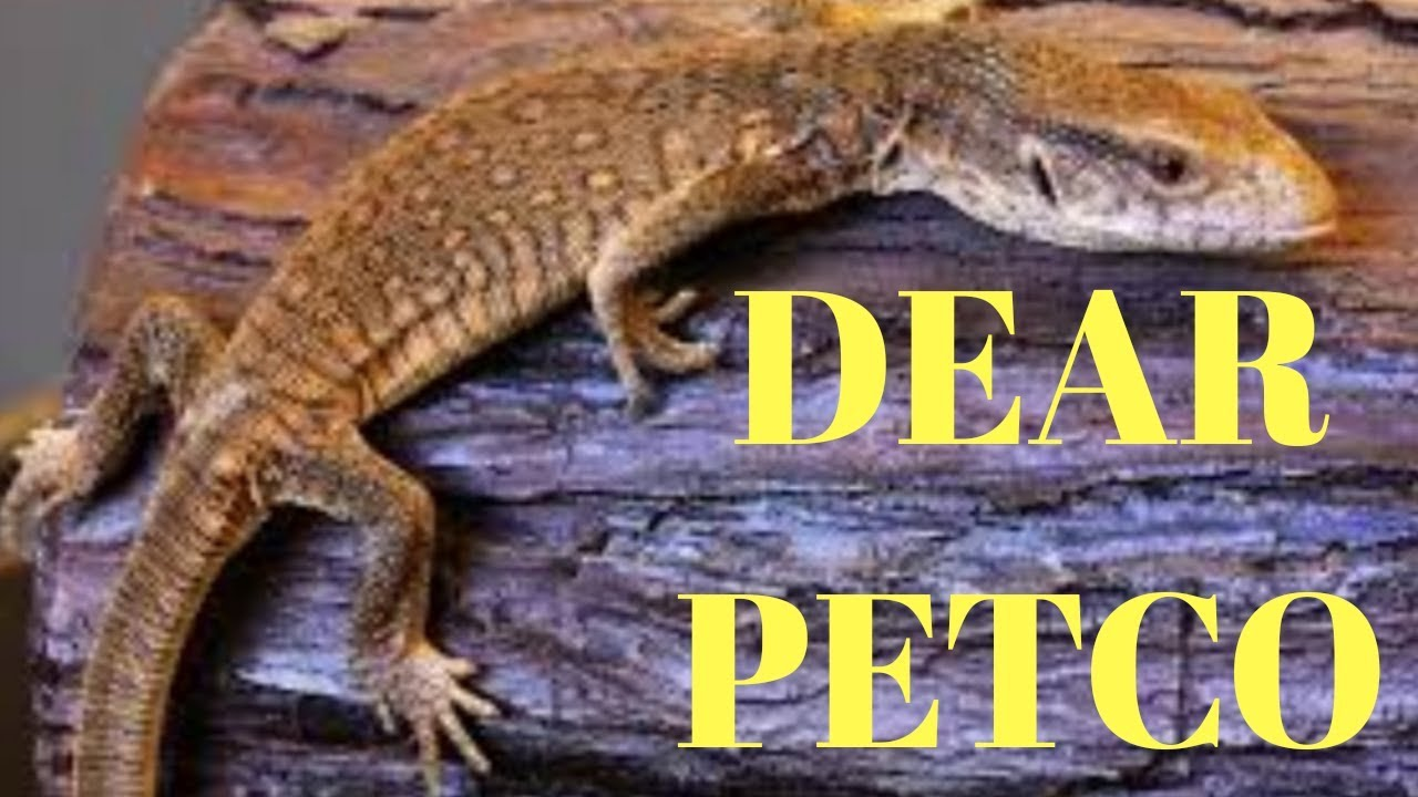Petco Animal Abuse (Lack Of Employee Knowledge) - YouTube