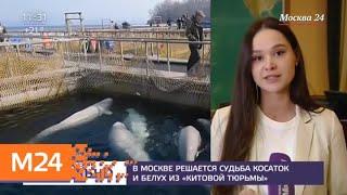 """В Москве решается судьба косаток и белух из """"китовой тюрьмы"""" - Москва 24"""