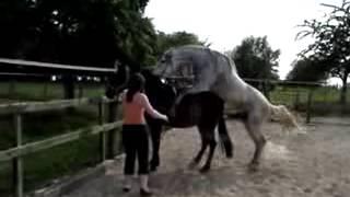 Atların Çiftleşmesi