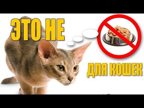 Самые опасные продукты для кошек